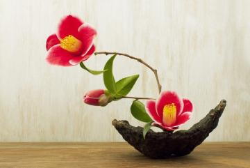 Introduction to Ikebana & Japanese Tea Ceremony